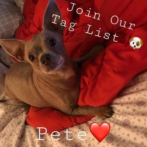 ❤️Like to join our tag list🐶